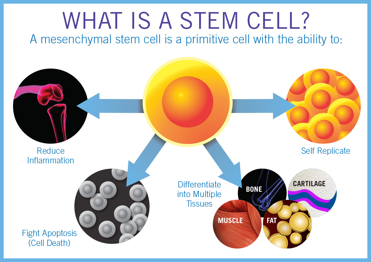 stem cell research medical advantages Medical benefits one of the best advantages of stem cell research is the medical benefits it provides they have been proven to drastically improve the condition of .