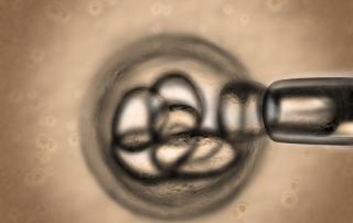 Live Adult Stem Cells